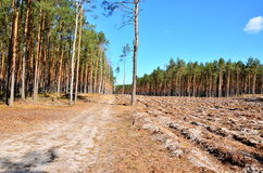 Bosque después de derribar Fotografía de archivo libre de regalías
