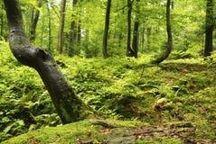 Bosque después de la lluvia Foto de archivo libre de regalías