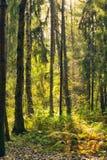 Bosque después de la lluvia Foto de archivo