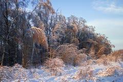 Bosque después de la lluvia del hielo Fotografía de archivo