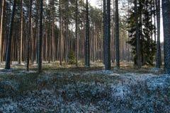 Bosque después de nevadas ligeras Imagenes de archivo