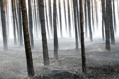 Bosque después del fuego Foto de archivo libre de regalías