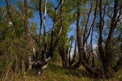 Bosque después del fuego Imagen de archivo libre de regalías