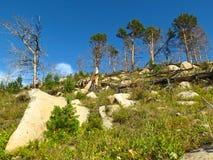 Bosque después del fuego en el lago Baikal Imagenes de archivo