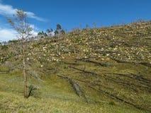 Bosque después del fuego en el lago Baikal Fotos de archivo