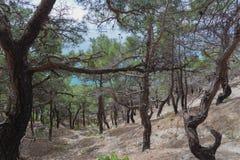 Bosque después del fuego Novorossiysk Rusia 13 05 2017 Foto de archivo