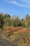 Bosque destruido Fotos de archivo libres de regalías