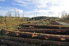 Bosque destruido Imágenes de archivo libres de regalías