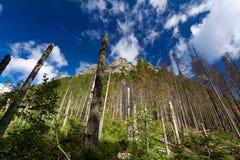 Bosque destruido. Imágenes de archivo libres de regalías