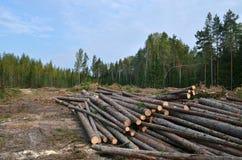 Bosque destruido Fotografía de archivo