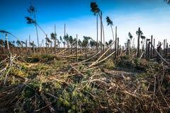 Bosque destruido como efecto de la tormenta fuerte fotos de archivo libres de regalías