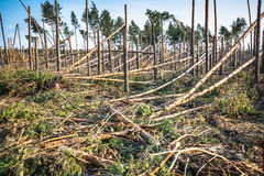 Bosque destruido como efecto de la tormenta fuerte imágenes de archivo libres de regalías