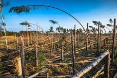 Bosque destruido como efecto de la tormenta fuerte foto de archivo