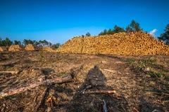 Bosque destruido como efecto de la tormenta fuerte imagen de archivo libre de regalías