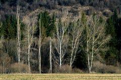 Bosque detrás del campo Fotografía de archivo libre de regalías
