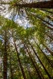Bosque do Avatar imagem de stock royalty free
