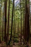 Bosque do Avatar fotos de stock