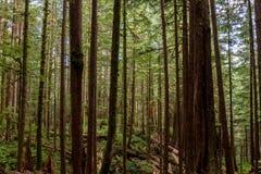 Bosque do Avatar imagem de stock