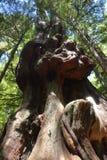 Bosque do Avatar imagens de stock