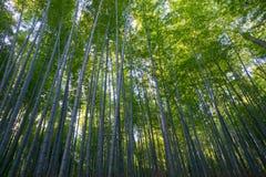 Bosque do bambu de Arashiyama Imagens de Stock Royalty Free