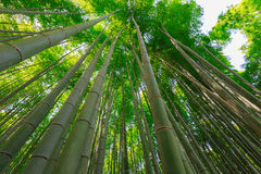 Bosque do bambu de Arashiyama fotografia de stock royalty free