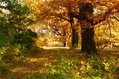Bosque do carvalho foto de stock
