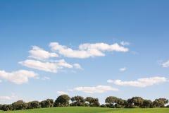 Bosque do carvalho em um campo de grama verde, sob um c?u azul imagens de stock