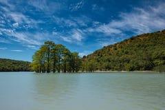 Bosque do cipreste de pântano na água do lago Sukko foto de stock royalty free