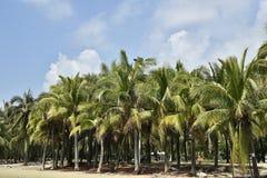 Bosque do coco pelo mar imagens de stock