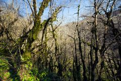Bosque do teixo e do buxo foto de stock royalty free