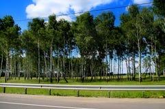 Bosque do vidoeiro da janela de carro contra o céu azul imagens de stock