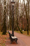 Bosque do vidoeiro do outono Foto de Stock