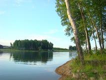 Bosque do vidoeiro na costa do reservatório de Irkutsk fotografia de stock royalty free