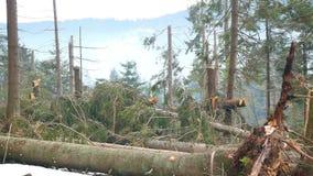 Bosque doblado del problema de los árboles almacen de metraje de vídeo