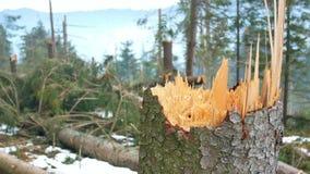 Bosque doblado del problema de los árboles metrajes