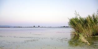 Bosque dos juncos em um lago no por do sol calmo e calmo Imagem de Stock