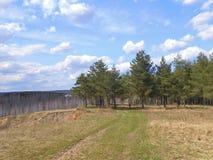 Bosque dos pinhos na elevação Foto de Stock Royalty Free
