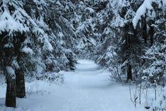 Bosque durante invierno Fotos de archivo libres de regalías