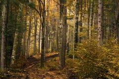 Bosque durante otoño Foto de archivo libre de regalías