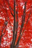 Bosque durante otoño Imágenes de archivo libres de regalías