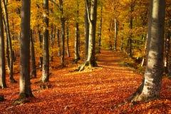 Bosque durante otoño Imagen de archivo libre de regalías