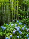 Bosque e hortênsias de bambu fotografia de stock royalty free