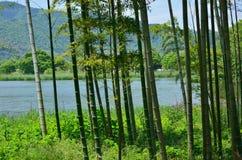 Bosque e lagoa de bambu, Kyoto Japão Imagens de Stock