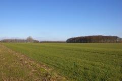 Bosque e trigo da floresta Fotografia de Stock