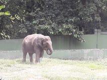 Bosque elefant del safari del color que sorprende fotografía de archivo libre de regalías