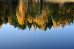 Bosque en agua imagen de archivo libre de regalías