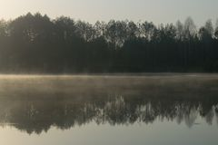 Bosque en agua del espejo Foto de archivo