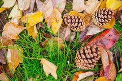Bosque en Autumn Fall Season Grass y hoja secada con la semilla de pino Imagen de archivo libre de regalías