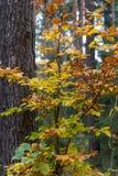 Bosque en caída Foto de archivo