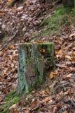 Bosque en caída Imagenes de archivo